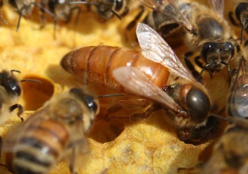 Michigan Beekeeping | Mike Risk | Risk's Honey | Risk's Honey - photo#40
